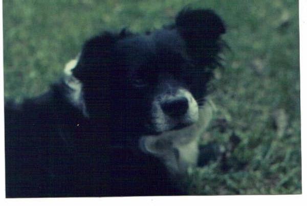 John's Dog Tyke