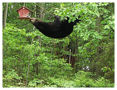 Minnesota Bird Feeder