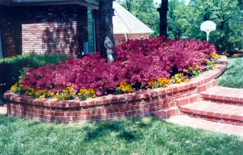 Azaleas_in_simmons_back_yard_3