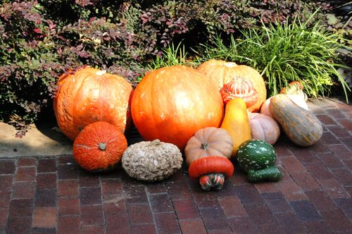 A Harvest of Fall Colors and Activities
