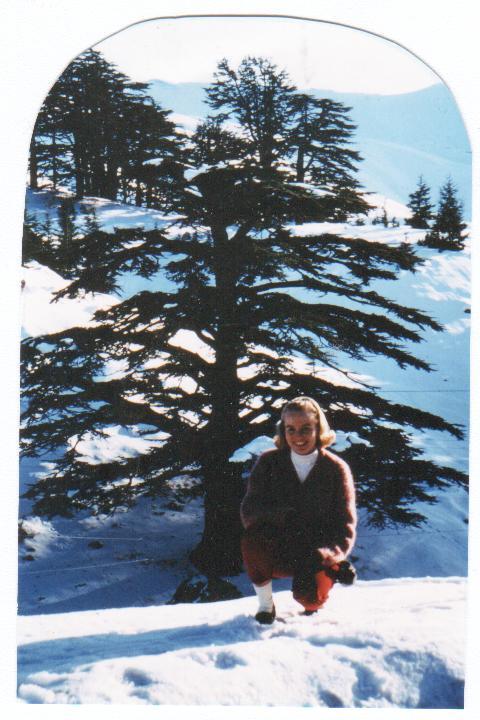 Na) The Cedars of Lebanon