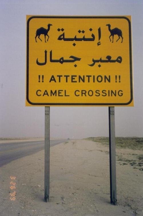 A - Camel Crossing